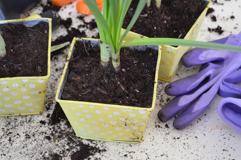 easy-diy-painted-pots-createandbabble