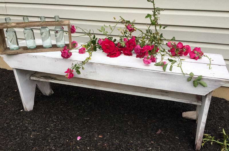 I-used-rose-bush-trimmings-to-fill-my-wine-bottle-beakers
