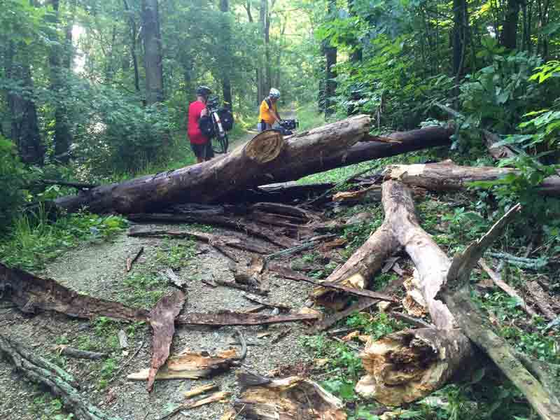 large-tree-down-on-trail