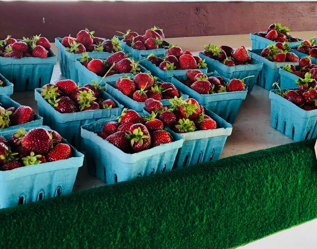 Fresh picked strawberries at a Amish Farm in Lancaster County Pennsylvania